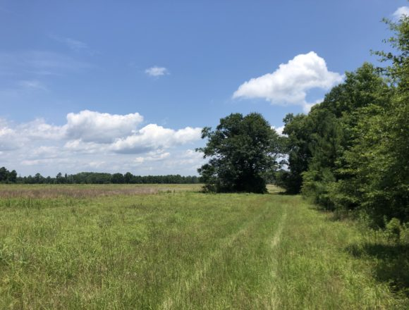 Properties – Branch Farm and Timberland